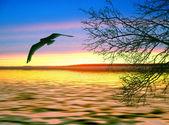 Birds flying on sunset background. — Stock Photo