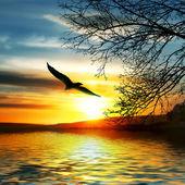 Bird flying above water. — Stock Photo
