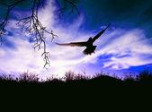 Bird flying in the evening — Stock Photo