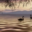 Landscape with swans — Stock Photo