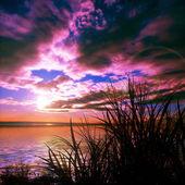 El paisaje en tonos violetas — Foto de Stock
