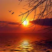 美丽的海 — 图库照片