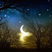 Nature at night — Stock Photo