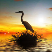 Bird on lake — Stock Photo