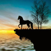 Horse and sun — Stock Photo