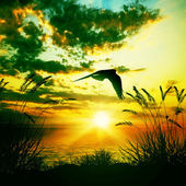 Flying bird over lake — Foto Stock