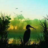 Silhueta de pelicano — Foto Stock