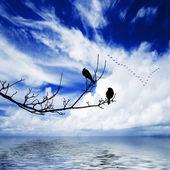 Birds on branch — Stock Photo