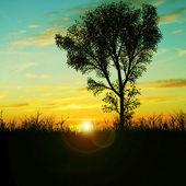 Tree and fantastic sky — Stock Photo