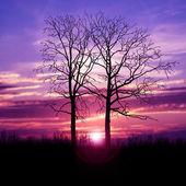 деревья и фантастическое небо — Стоковое фото