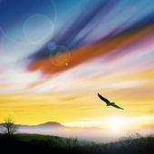 Bird flying in the evening — Stock Photo