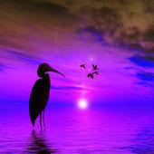 Beau paysage coucher de soleil — Photo