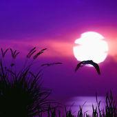 Bellissimo paesaggio tramonto — Foto Stock