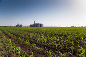 Crops and Silos — Stok fotoğraf