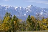 Very beautiful autumn Altay mountains — Stock Photo