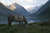 Horse, Lake Ak-kem. — Stock Photo