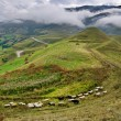 Ewes and sheeps. North Ossetia, Russia. — Stock Photo #19498179