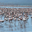 Million pink flamingos. — Stock Photo