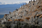 Relaxing sealions and sea birds. — Stockfoto