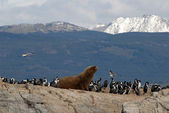 Sealion and sea birds. — Foto Stock
