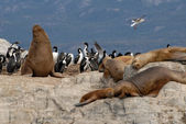 Relaxinng sealions and sea birds. — Stockfoto