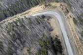 Aerial view of larch and conifer forest in spring. — Stock Photo