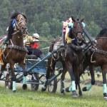 Horse race. Three horses in harness — Stock Photo