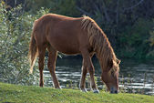 Horse eating grass. — Stock Photo
