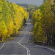Autumn road in forest. — Stock Photo