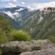 Blue mountains. Australia. — Stock Photo