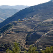 Douro Valley - mail Vineyard region in Portugal. - Stok fotoğraf