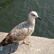 Seating seagull at seafront — Stock Photo