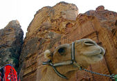 Camel in Petra. Jordan. — Stock Photo