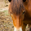 Royalty-Free Stock Photo: A portrait of horse