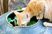 Um gato a beber de um copo de água — Foto Stock