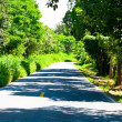 Stock Photo: Road with trees on both sides