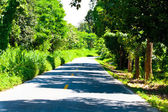 Road with trees on both sides — Stock Photo