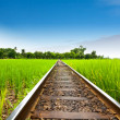 Stock Photo: Railway on field rice green grass