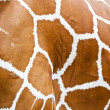 Stock Photo: Giraffe skin fur background