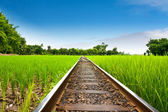 Railway on field rice green grass — Stock Photo