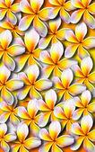 Ilustração de fundo linda plumeria — Foto Stock