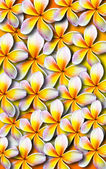 Vackra plumeria bakgrund illustration — Stockfoto