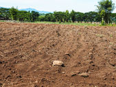 Brown agricultural soil of a field — Stock Photo