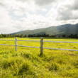 Green pastures of horse farms. — Stock Photo #41380209
