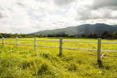 Green pastures of horse farms. — Stock Photo