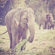 Asian elephant mother and baby in Thailand with retro effect — Stock Photo #42725907