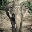 Asian elephant mother and baby in Thailand with retro effect — Stock Photo #42726101