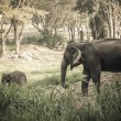 Asian elephant mother and baby in Thailand with retro effect — Stock Photo #42726263