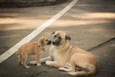 Anne köpek ve köpek yavrusu — Stok fotoğraf