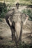Asian elephant mother and baby in Thailand with retro effect — ストック写真